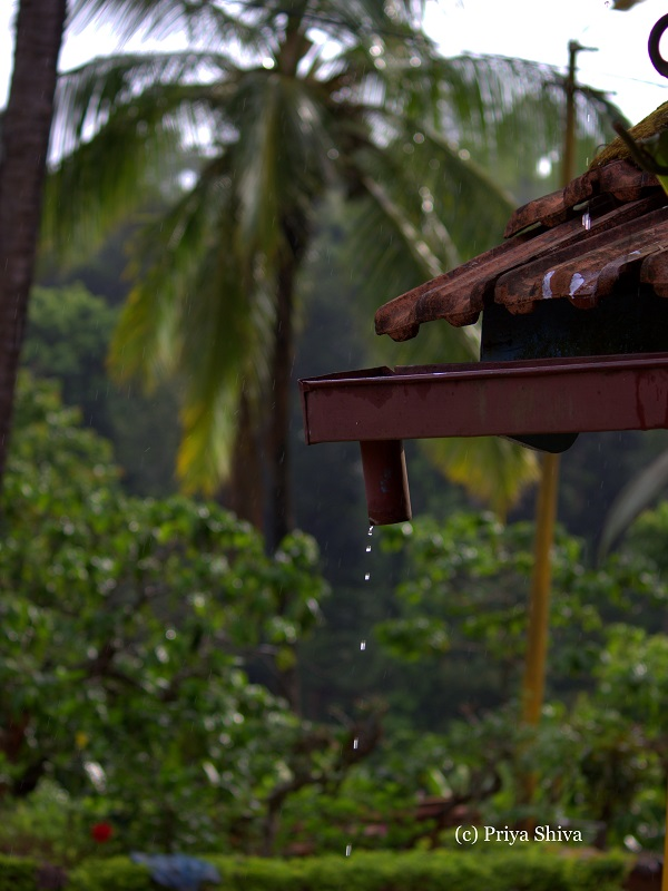 Rainy day in brain hunt homestay - South Coorg
