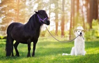 Update on Emotional Support Animals: Dept of Transportation Okays Miniature Ponies on Planes