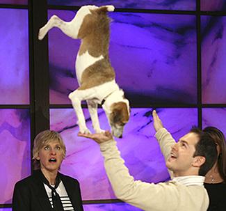 Stunt Dog Productions