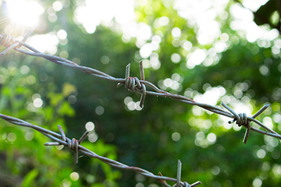 87648258 - barbed wire on sunny greenery background. barbed wire under sunshine. water drops on sharp wire knots. garden fence protecting property. black wire border. nature