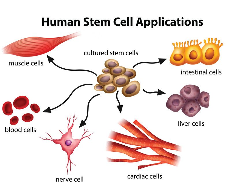adult stem cell legislation