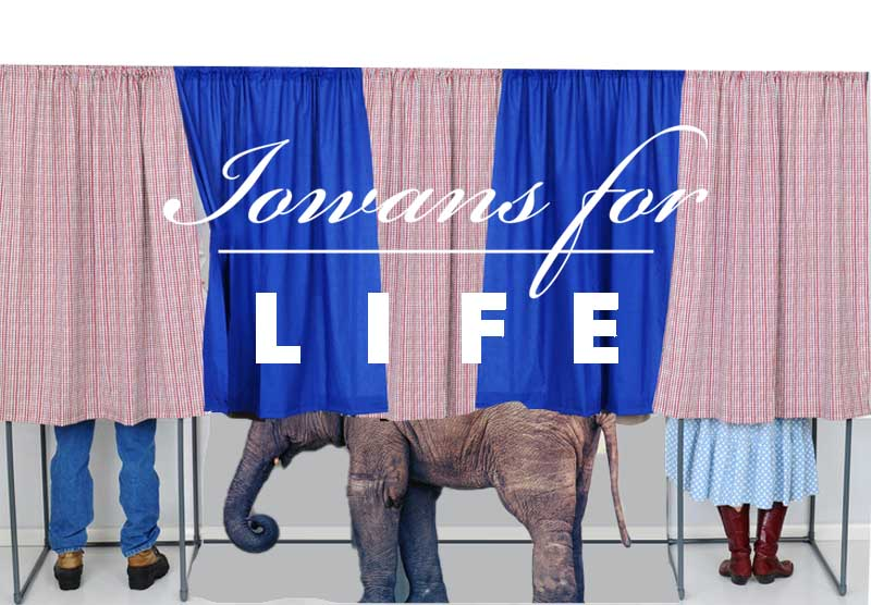 elephant in the voting booth
