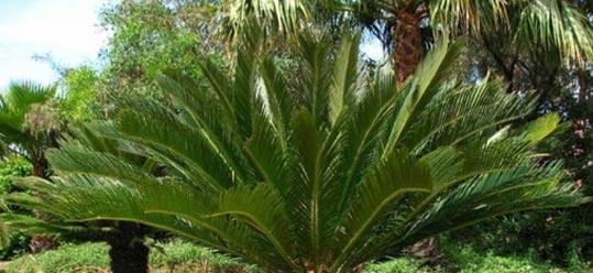 palm-tree3