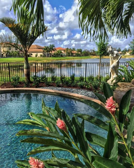Tropical landscape setting around a renovated area surrounding the pool. Pink Ginger blooms in the foreground, with a Spindle palm accent by the fence. A 5' tall piece of Statuary on a pedestal adds a definite focal point and influence to the scene.