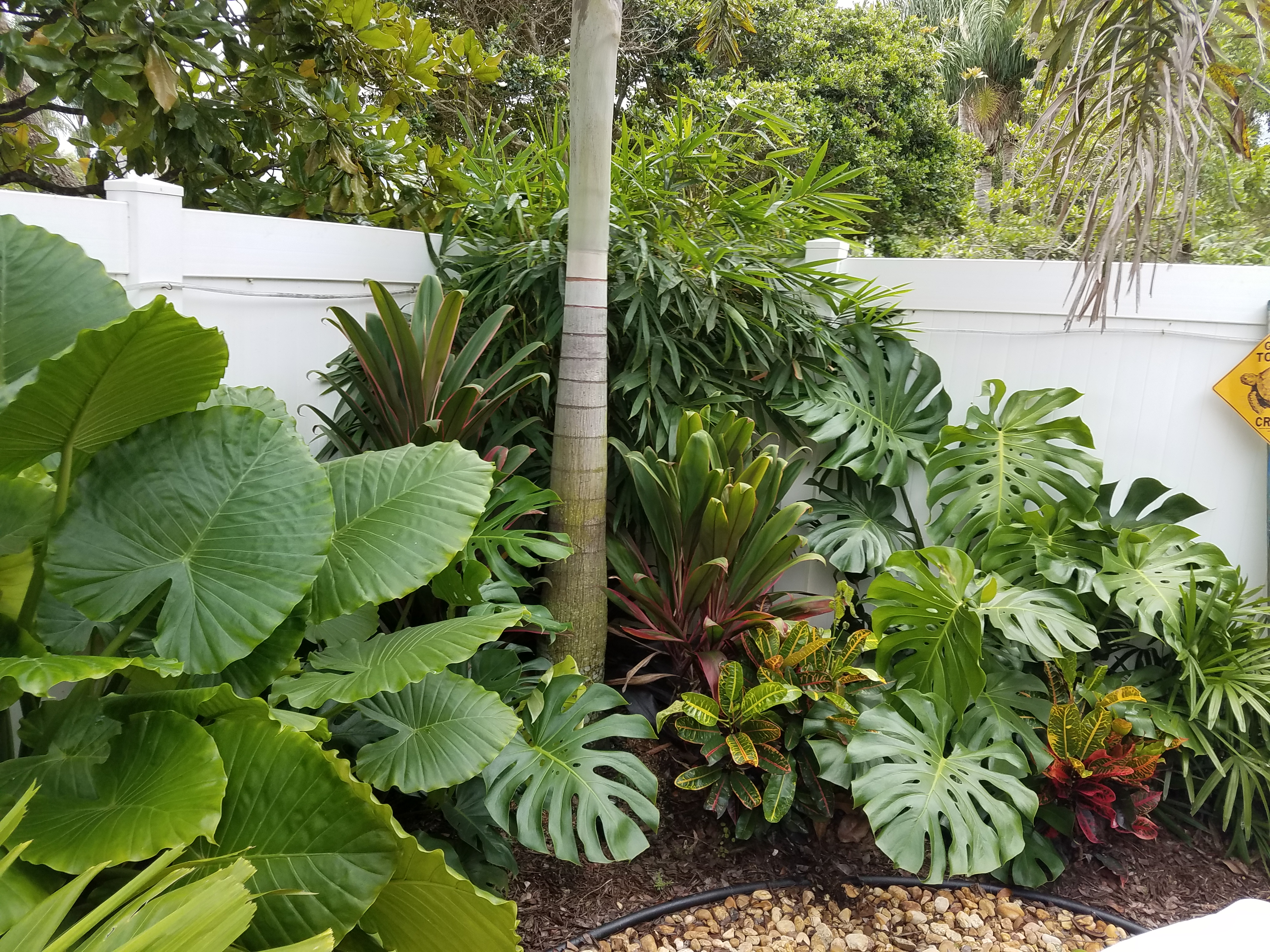 Tropical Plants In Landscapes West Palm Beach Universal