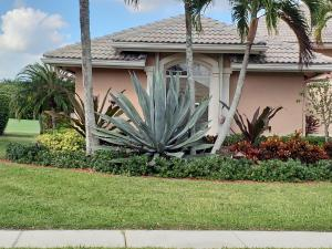 Blue Agave - mature, approx. 8' to 9' height in front of home