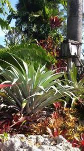 Bromeliad Alcantera