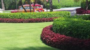 Colius - in established planting