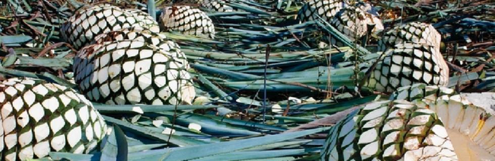 Denominacion de Origen del Tequila Mexico