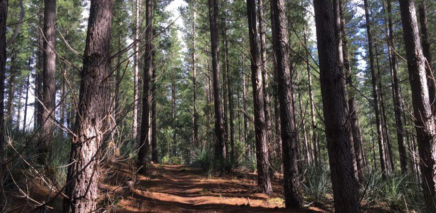 Kuitpo Forest Social Run