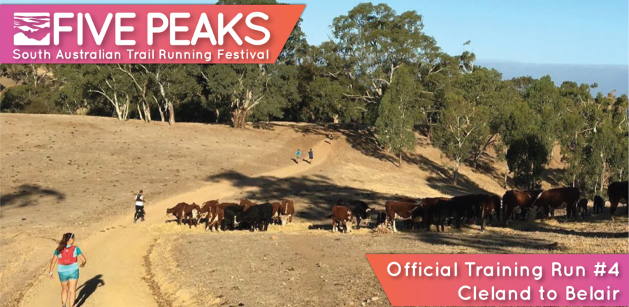 Five Peaks Official Training Run #4 – Cleland to Belair (23 km)
