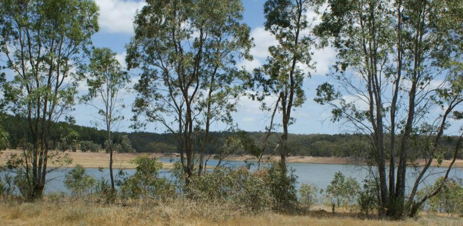 South Para Reservoir Reserve