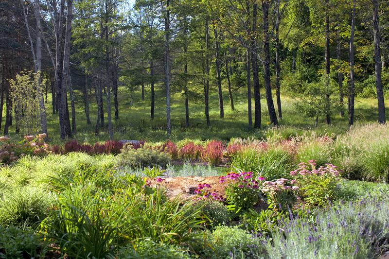 Egremont – woodland edge texture