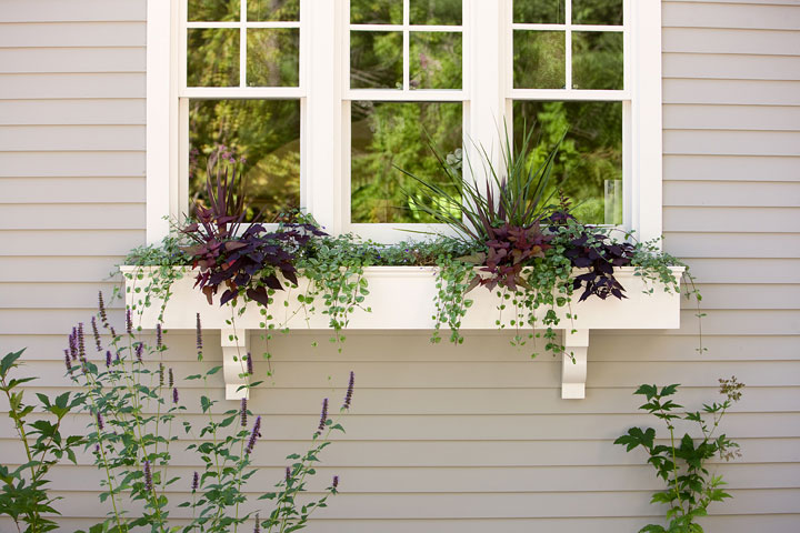 Rock-On-window-box-north-facing