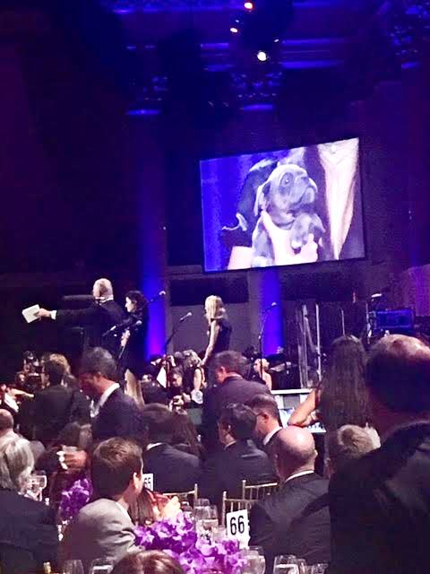19th Annual Samuel Waxman Cancer Research Foundation COLLABORATING FOR A CURE Benefit Dinner & Auction #WaxmanGala @WaxmanCancer 3