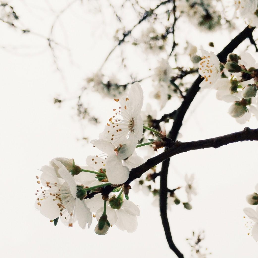 Blossoms, Gorge Waterway Park, Saanich, British Columbia