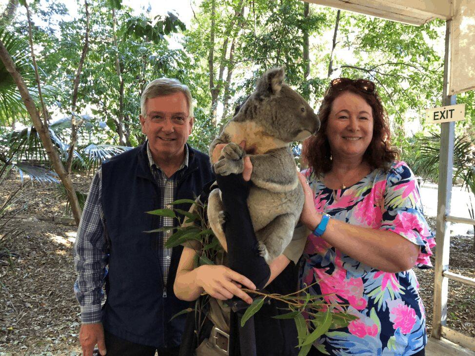 Koala in Brisbane Zoo - Clow Family Update