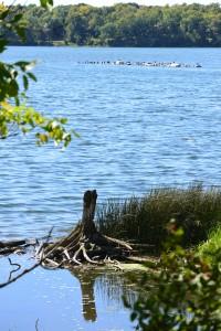 Cormorants and coming driftwood along the clt | http;//juliesaffrin.com