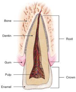 Traumatic-Dental-Injuries