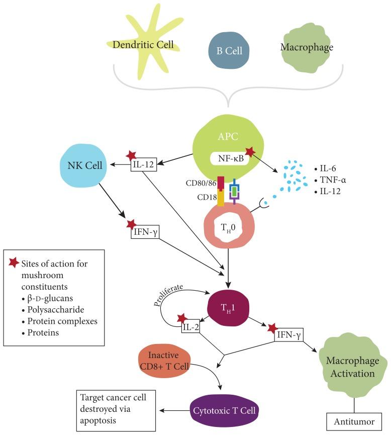 цитокины