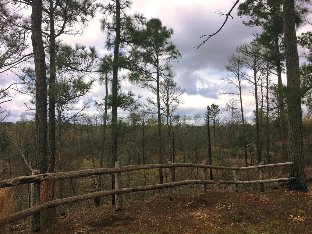 pines buescher state park