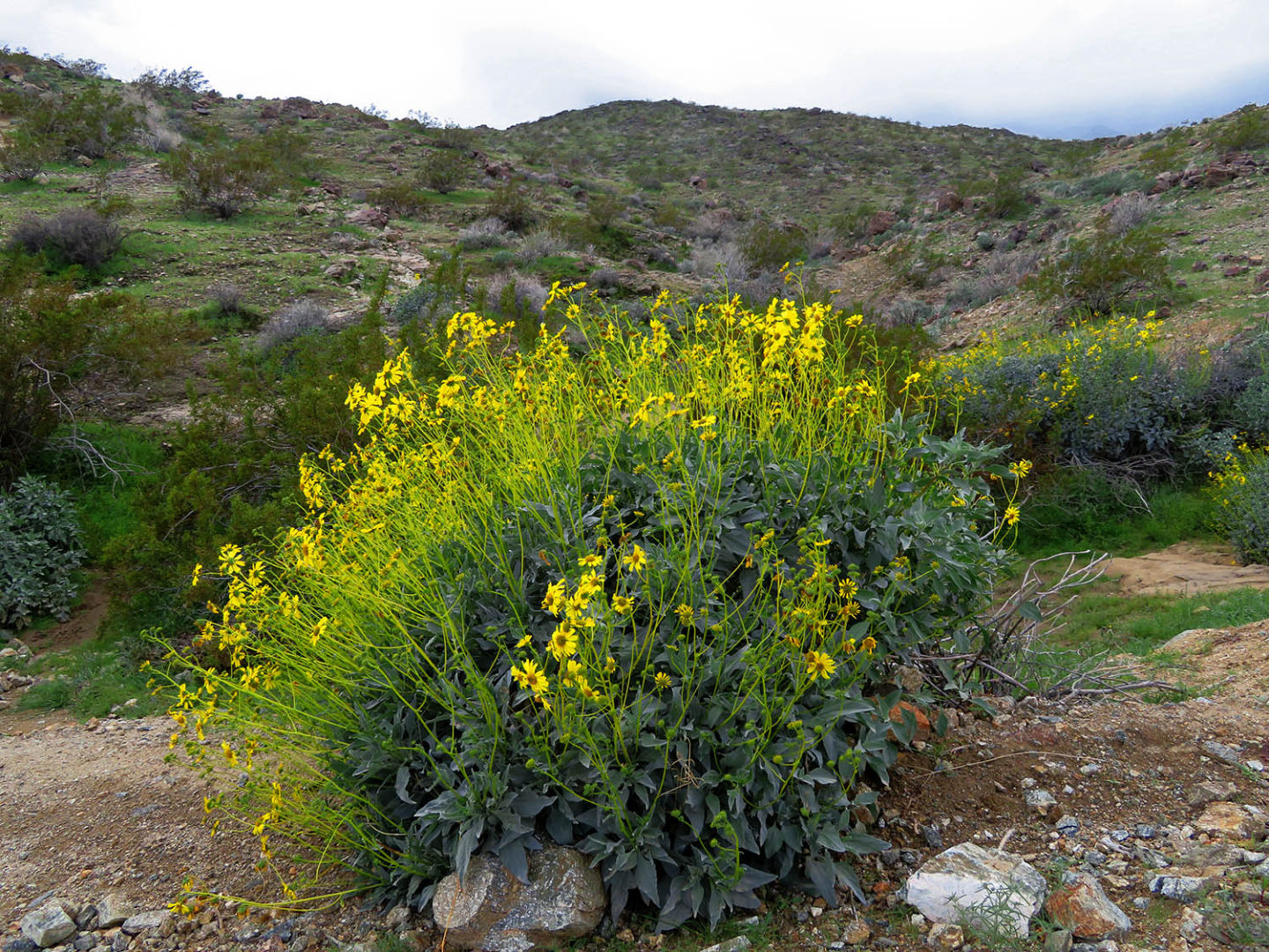 Araby Trail: wildflowers, and a storm brewing