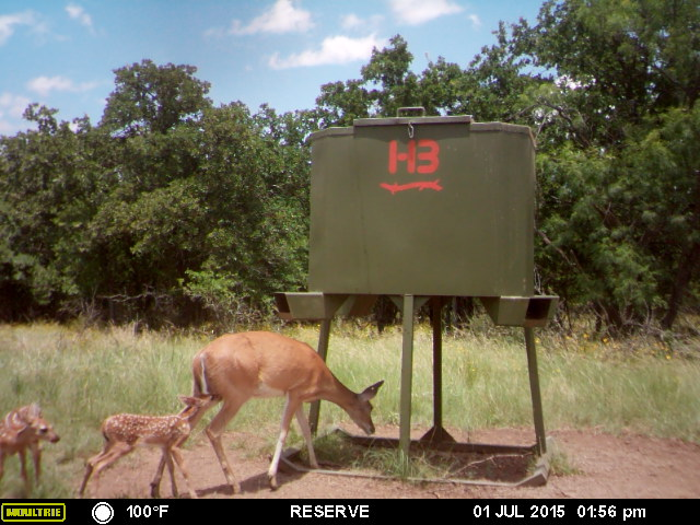 Whitetail Deer Hunting pictures