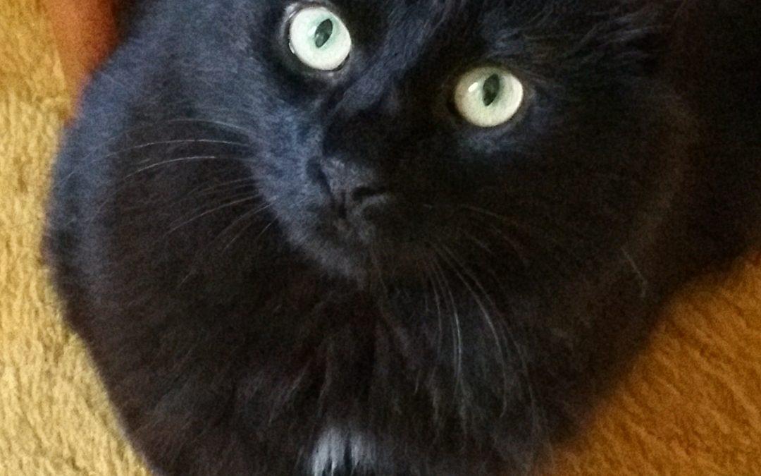 Lost Black Cat – Area of St. Agnes Lane