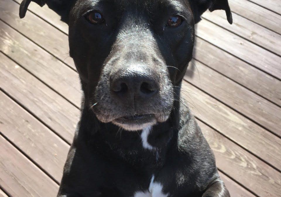 Found Dog – Roberts Street, West Mifflin