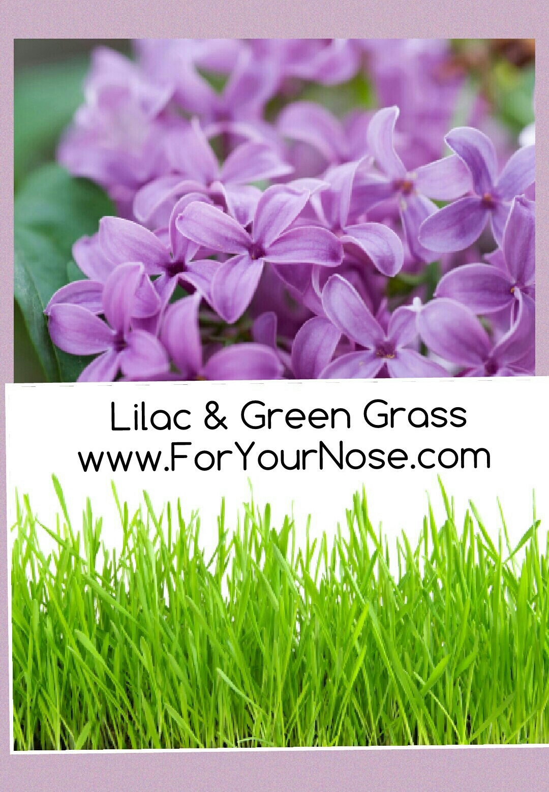 Lilac & Green Grass fragrance