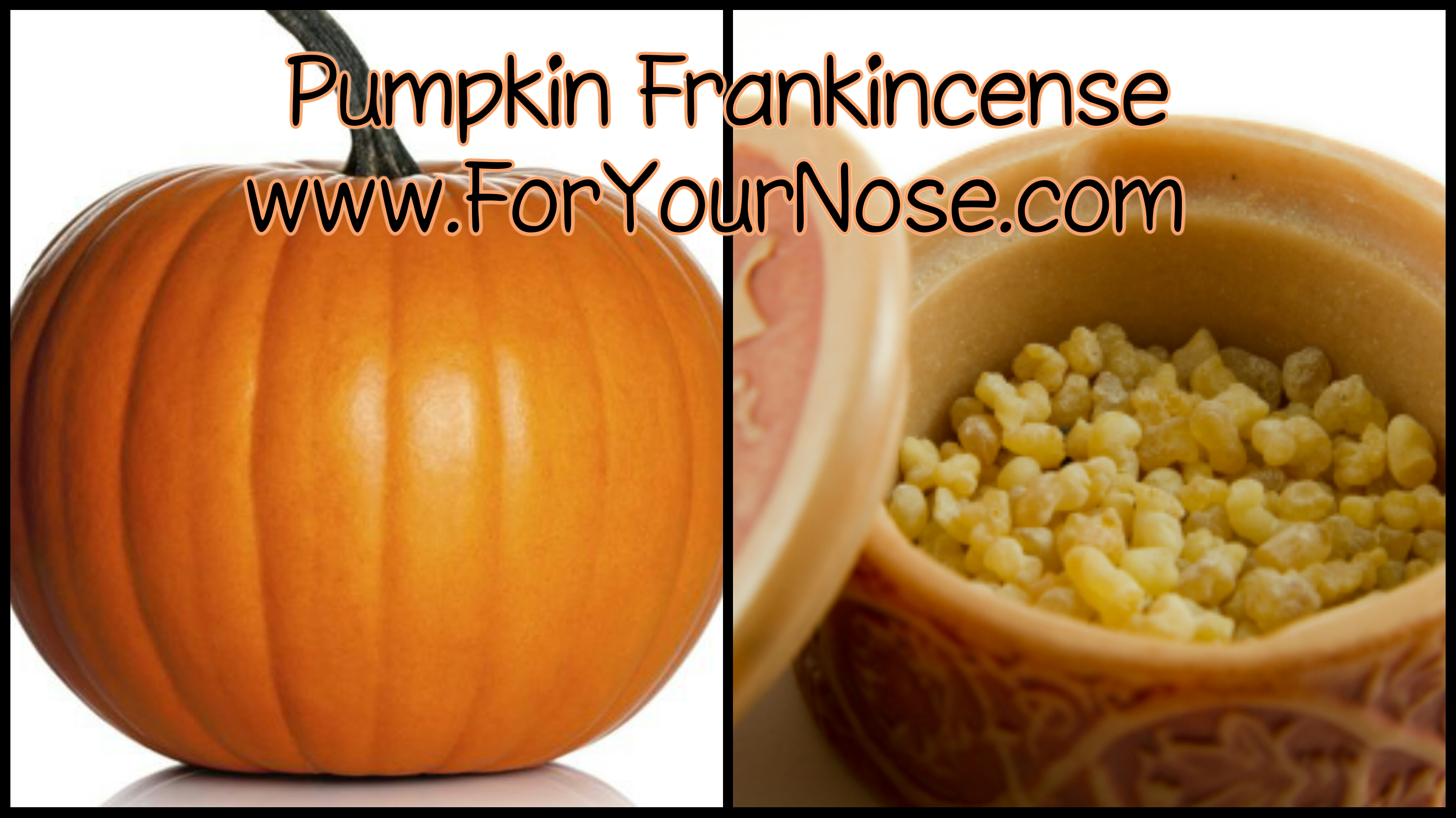pumpkin frankincense fragrance