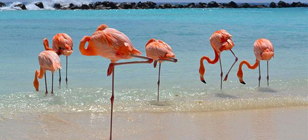 Aruba Vacation   Renaissance Aruba Resort & Casino