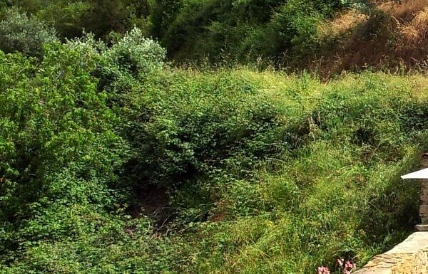 brambles on a hill