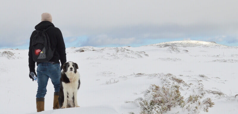 Man and dog on a snow hike, Serra da Estrela, Portugal
