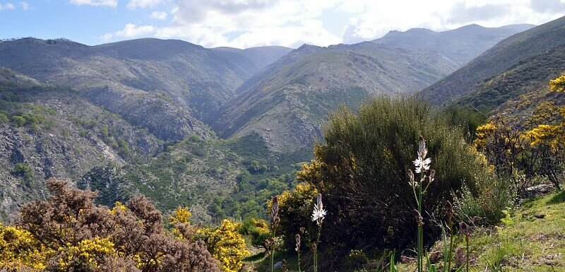 Ramiscal protected area, Peneda-Gerês National Park