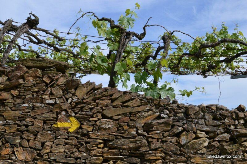 Camino waymarker, schist wall and grape vines