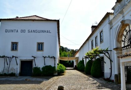 Quinta do Sanguinhal winery, Silver Coast Portugal