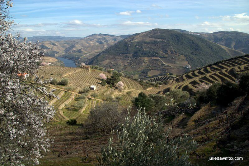 View from Casal de Loivos, Douro wine region, Portugal