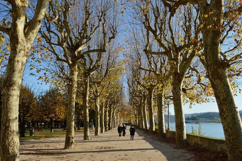 Parque Manuel Braga, Coimbra