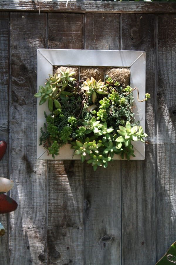 Our mini-vertical planter turns gardening on its side!