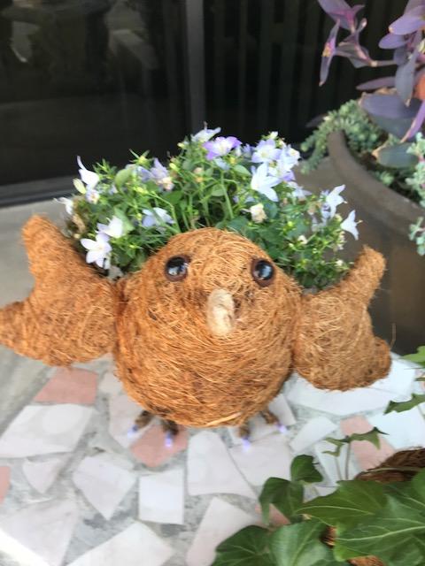 Bird Coco Planter by ShopDePalma