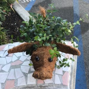 Pig Coco Planter by ShopDePalma