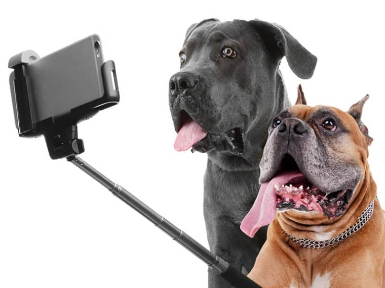 dogs taking a selfie