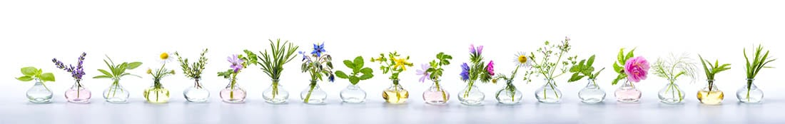 essential oil flowers in vases