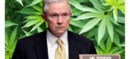Sessions Harshes California's Buzz