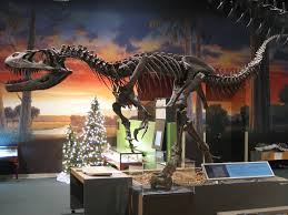 Dinosaur skeleton - a raptor - on display in a museum.