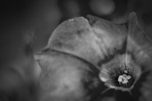 TrickleCreek_Flora-33