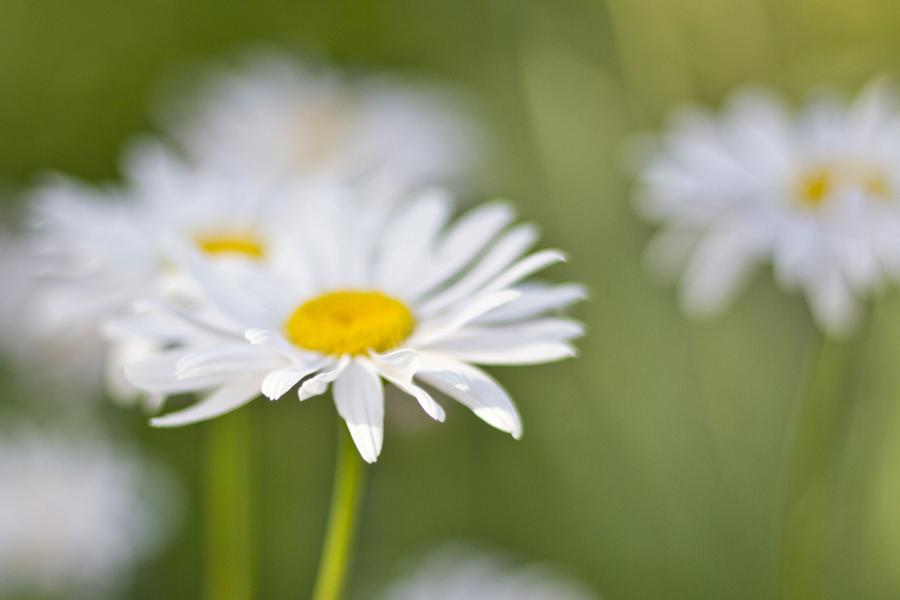 TrickleCreek_Flora-65
