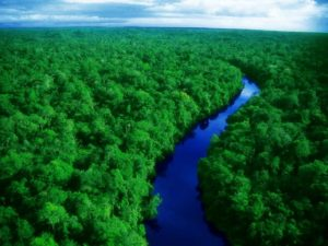 green-amazon-forest_94325-1024x768