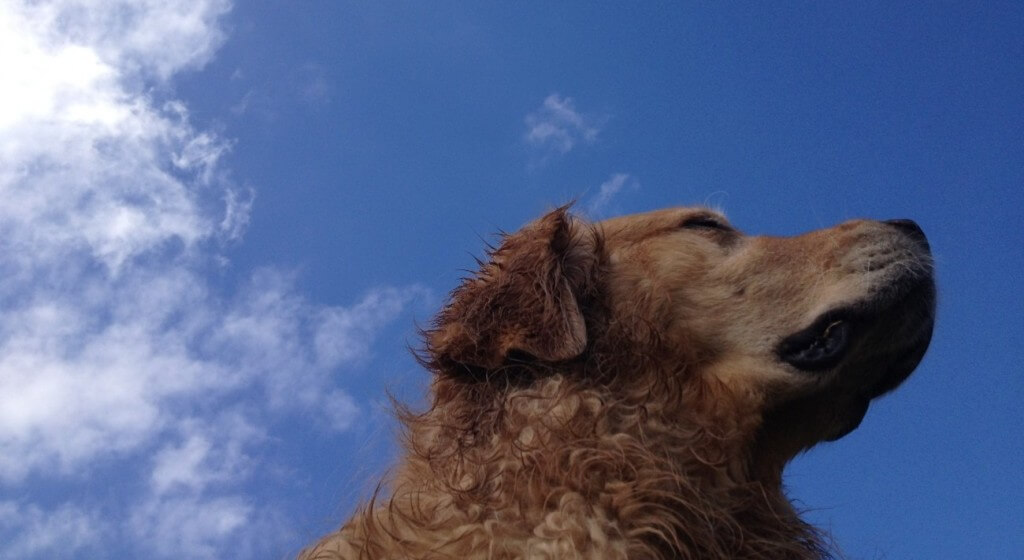 MyDogLikes is a dog blog dedicated to highlighting the best the dog world has to offer.